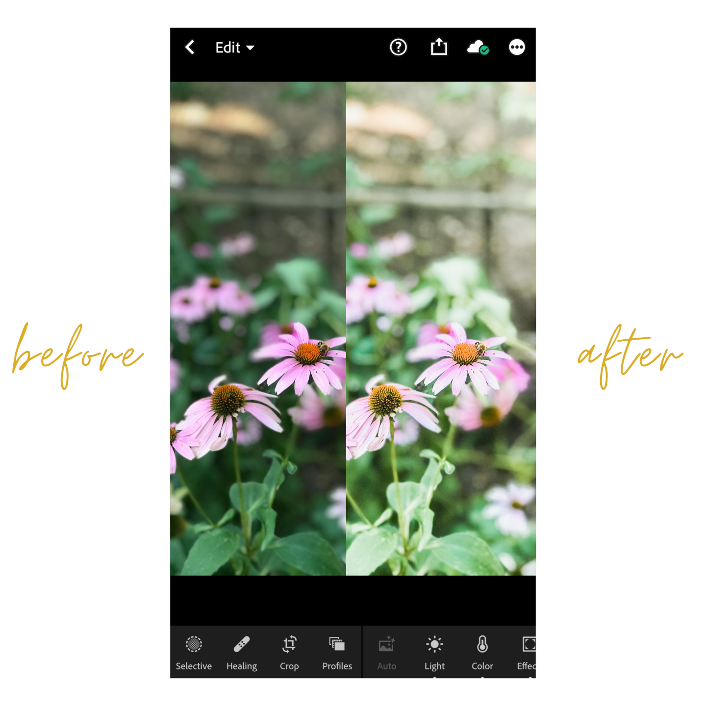 How to Edit Your Photos Like a Pro with Lightroom CC for Mobile + 3 Free Presets